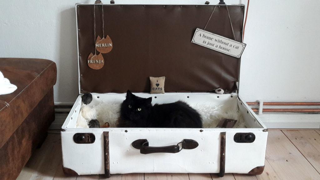 alter koffer mit katze