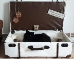 Dachbodenfund Koffer wird zum Katzenbett