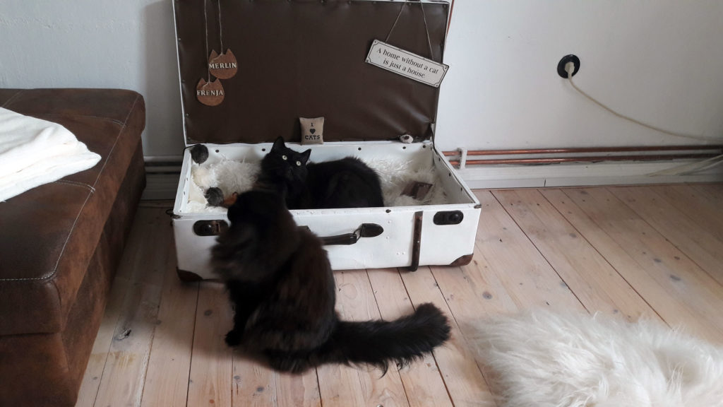 alter koffer mit katzen