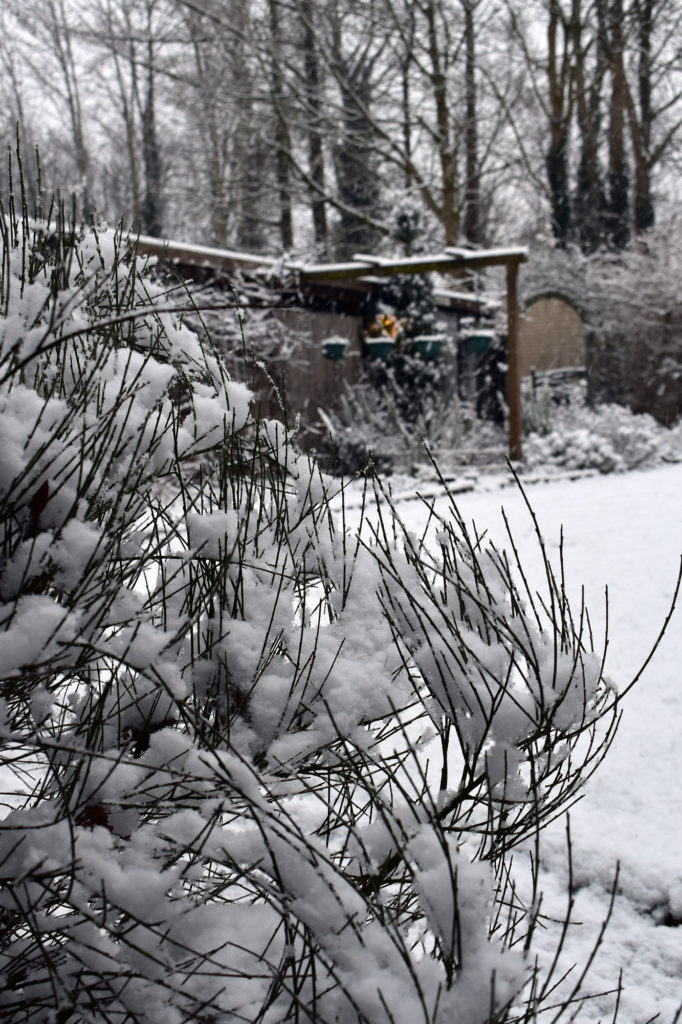winter landhaus garten