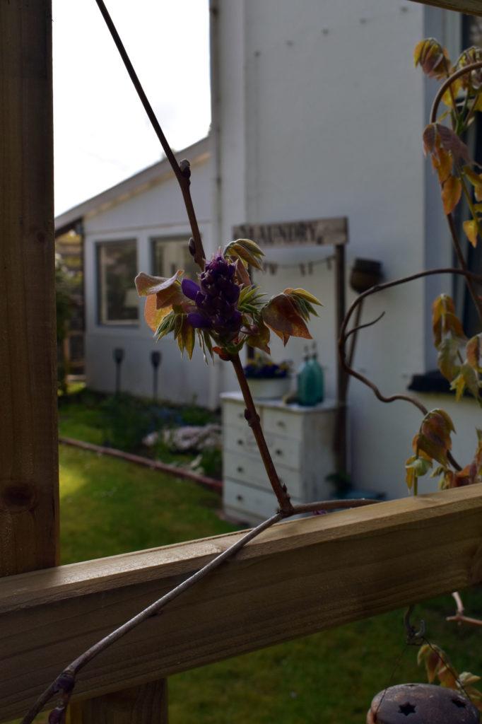 garten fruehling landhaus