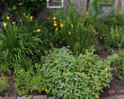 Gartentour Sommer 21 Teil 1
